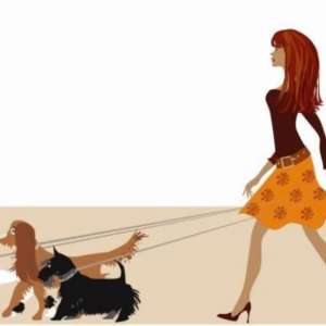 Alice's Dog Walking Services