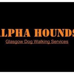 Alpha Hounds Glasgow Dog Walking
