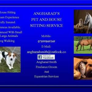 Angharads Pet And House Sitting Service