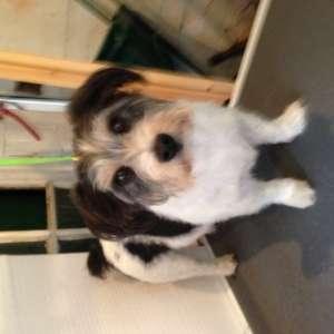 Calveley Dog Grooming