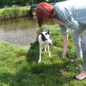 Dee's Dog Walking And Pet Sitting