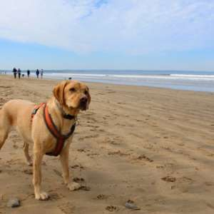Pet Friendly Accommodation in North Devon