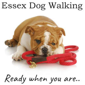 Essex Dog Walking