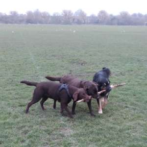 Happy Hounds Gloucester