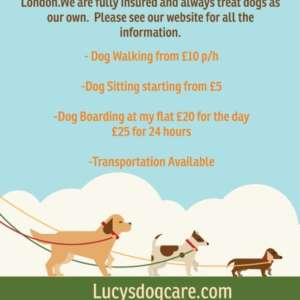 Lucys Dog Care Walking And Services