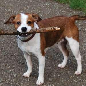 Mucky Pups Dog Walking Service