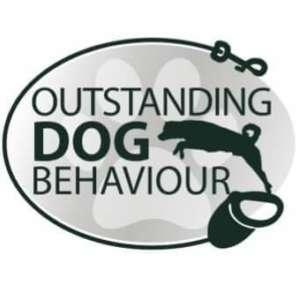 Outstanding Dog Behaviour