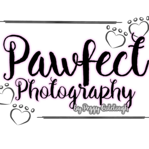 Pawfect Photography