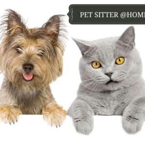 Pet Sitter Home2home
