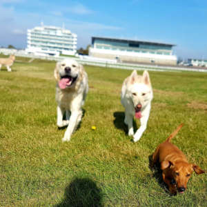 Team Paws Dog Walking And Pet Services