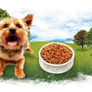 Tenbury Wells Dog Walking And Pet Services