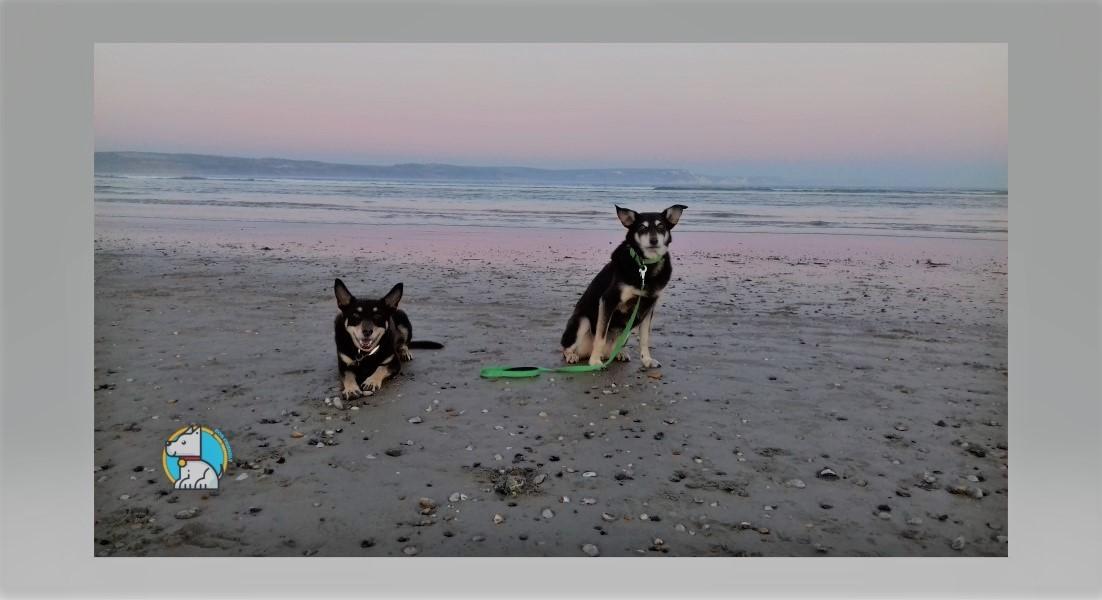 lindadogfriendlysocial profile