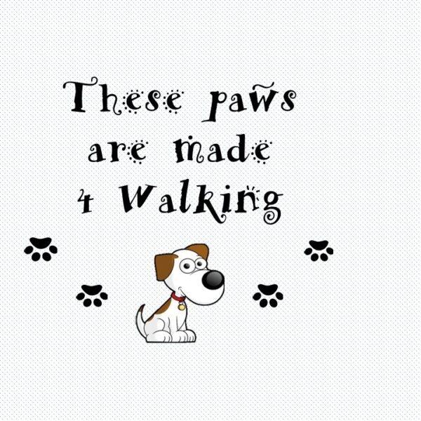 Thesepawsaremade4walking profile