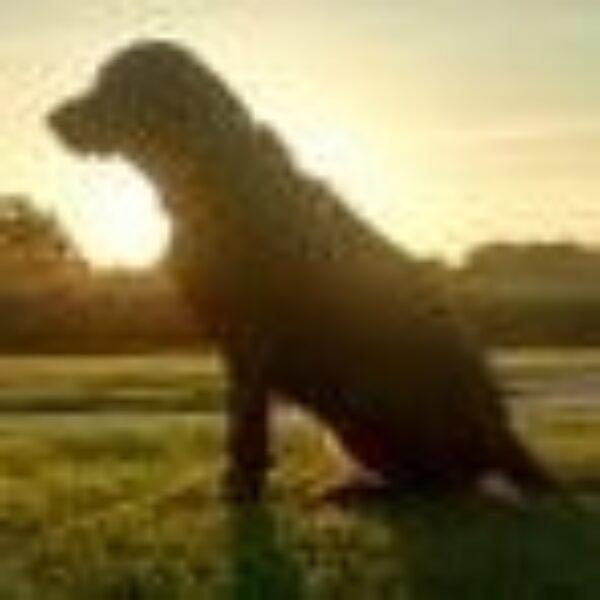 slotbob profile