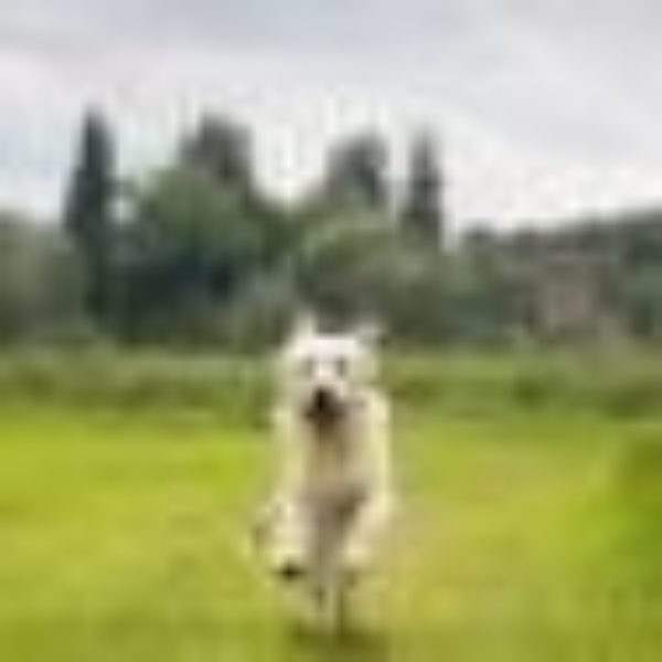 mybestfrienddogcare profile