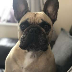 Gus profile
