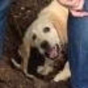 waggydog profile