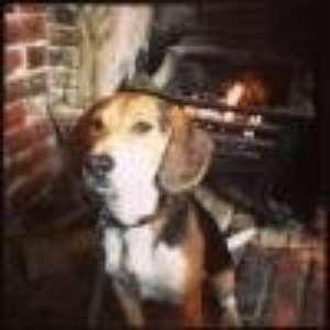 beagleswag profile