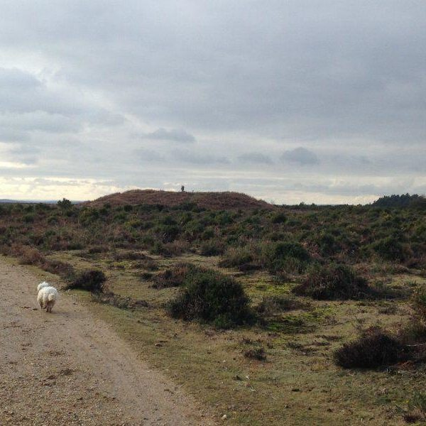 Dog walk at Abbotswell To Fritham