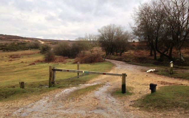 Abbotswell To Fritham Dog walk in Hampshire