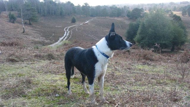 Dog walk at Acres Down