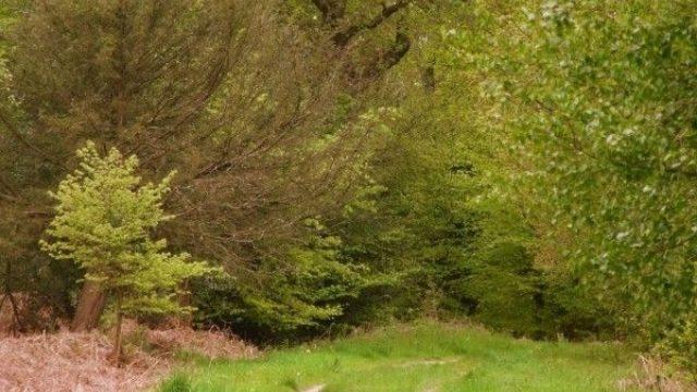 Dog walk at Alice Holt Forest