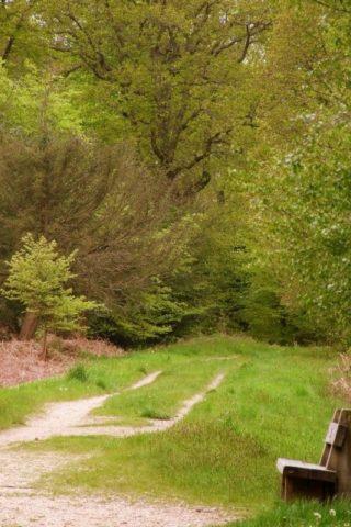 Dog walk at Alice Holt Forest photo