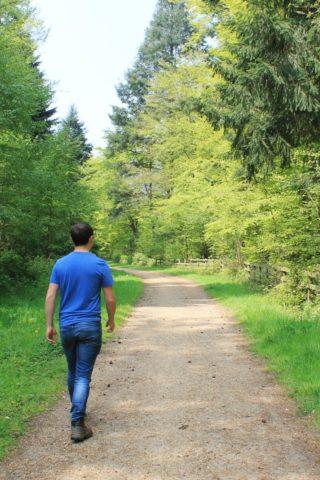 Dog walk at Ampfield Woods photo