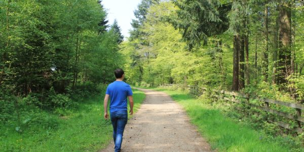 Ampfield Woods