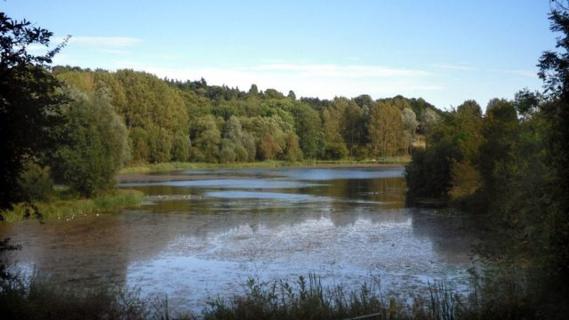 Dog walk at Amwell Nature Reserve & Ash Valley