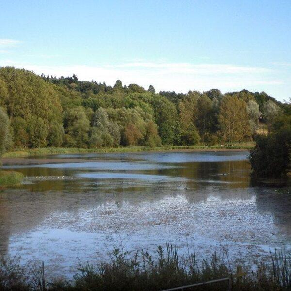 Dog walk at Amwell Nature Reserve & Ash Valley