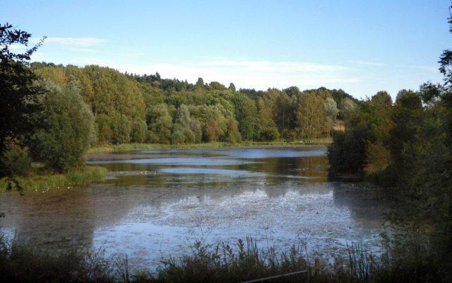 Amwell Nature Reserve & Ash Valley Dog walk in Hertfordshire