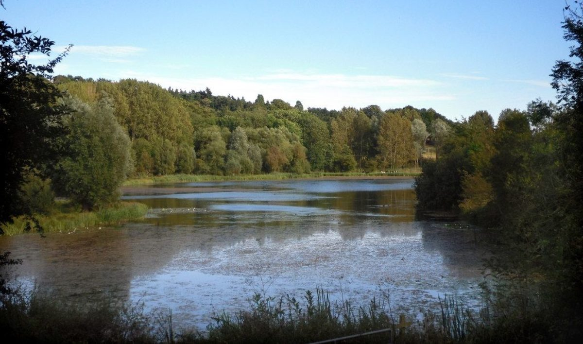 Amwell Nature Reserve & Ash Valley large photo 1