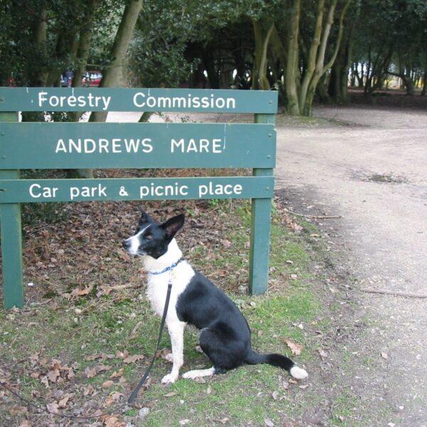 Dog walk at Andrews Mare