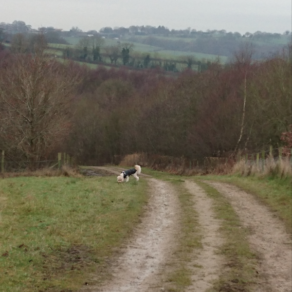 Dog walk at Apedale