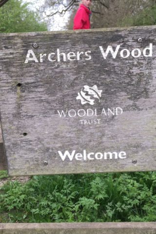 Dog walk at Archers Wood photo