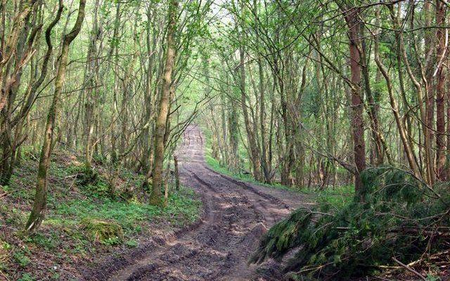 Archers Wood Dog walk in Cambridgeshire