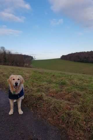 Dog walk at Arundel Estate photo