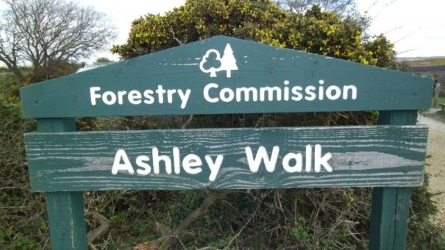 Dog walk at Ashley Walk (New Forest)