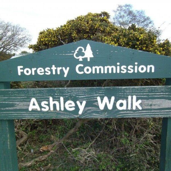 Dog walk at Ashley Walk (New Forest)