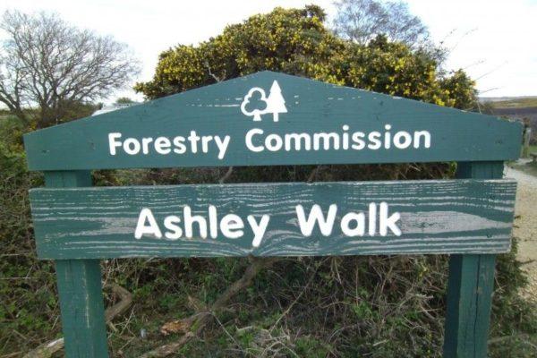 Ashley Walk (New Forest)photo