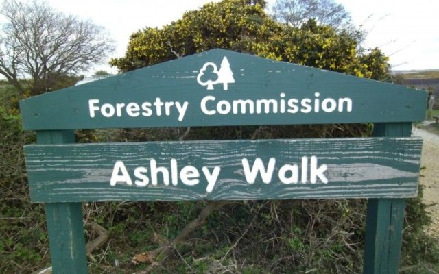 Ashley Walk (New Forest) Dog walk in Hampshire