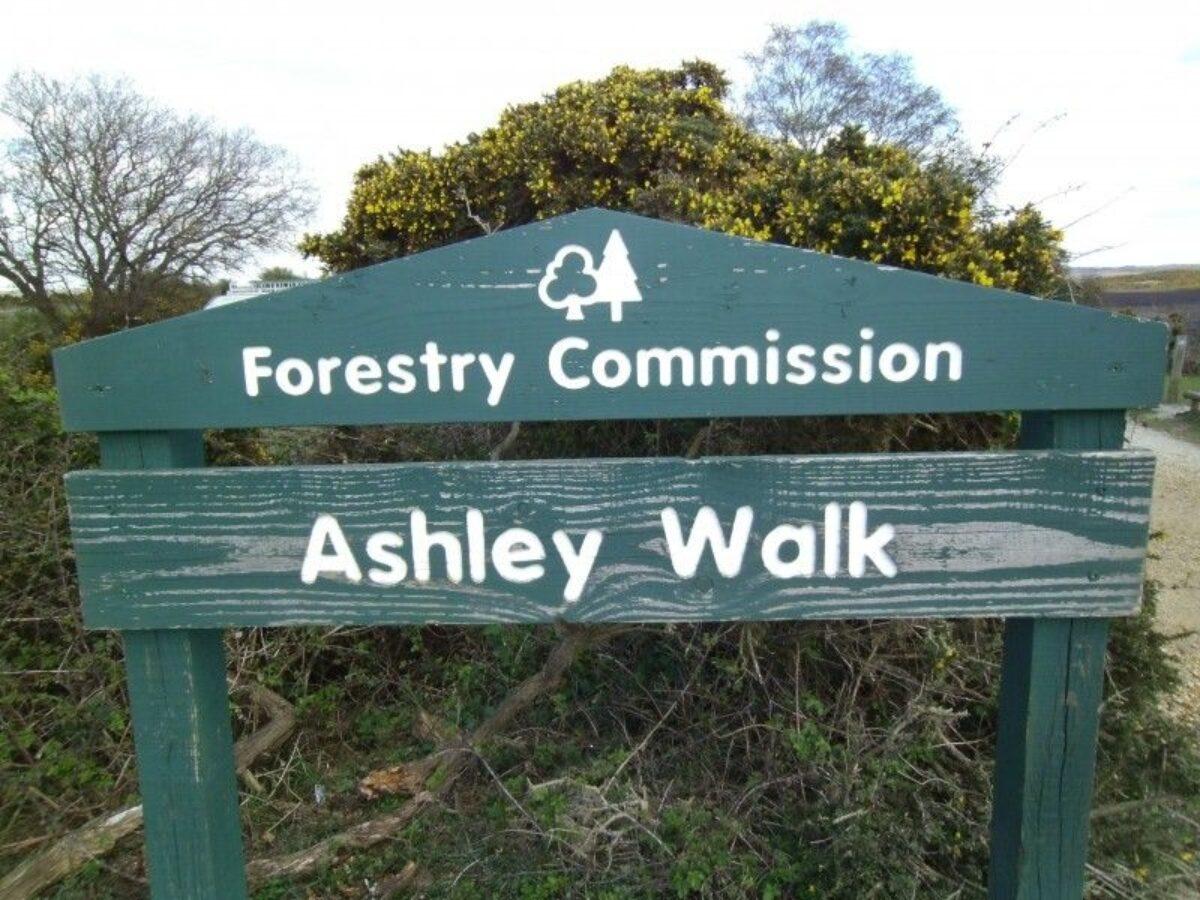 Ashley Walk (New Forest) large photo 1