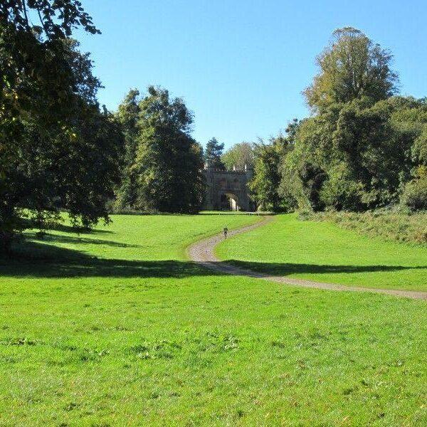Dog walk at Ashton Court Mansions & Gardens