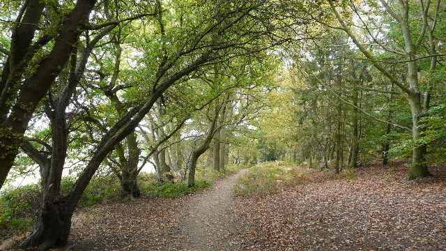 Dog walk at Aspley Woods