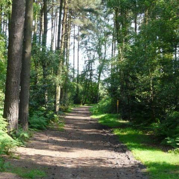 Aspley Woods photo 3