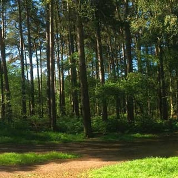 Aspley Woods photo 2