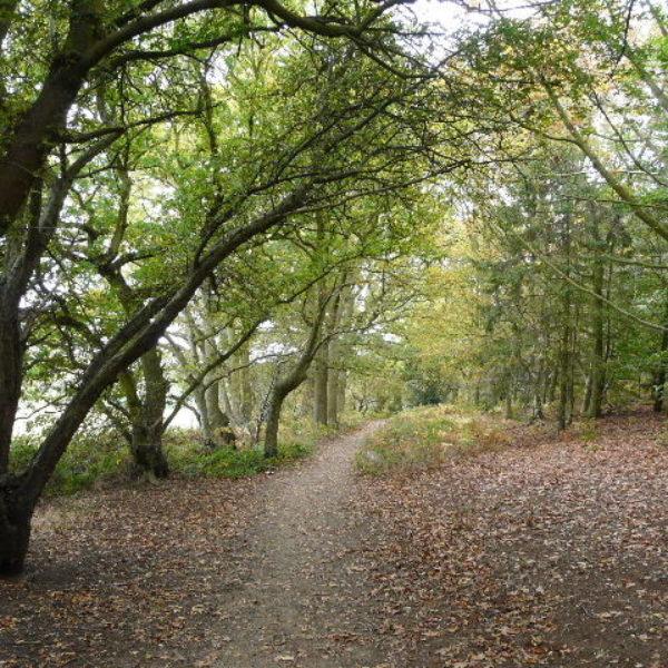 Aspley Woods photo 1