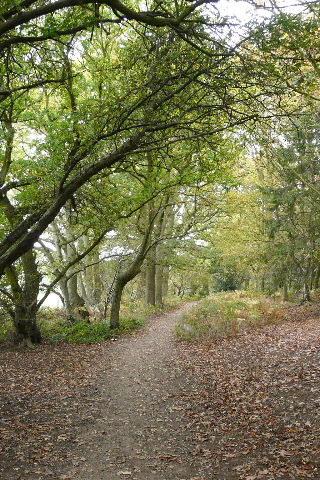 Dog walk at Aspley Woods photo
