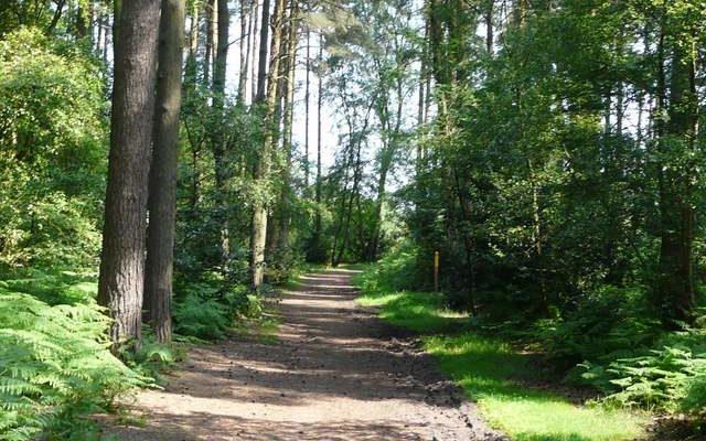 Aspley Woods Dog walk in Bedfordshire